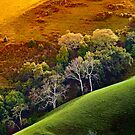 &quot;Hills Alive With Color&quot; by Donn Hoyer