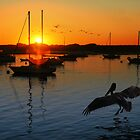Morro Bay Sunset by Donn Hoyer