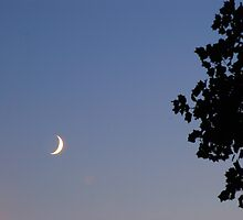 Tree Face and Thumbnail Moon by xPressiveImages
