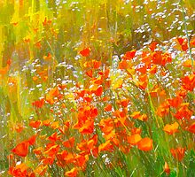 Poppy Field Art by Doug Scott