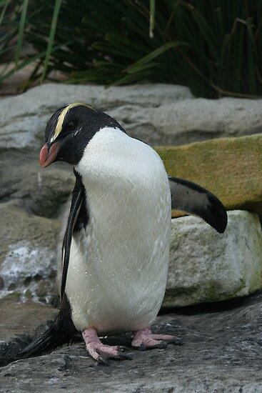 penguin by niki78