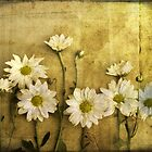 Daisies by Mindy McGregor