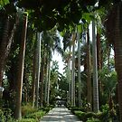 Botanic Gardens Kitchener Island Egypt by inglesina