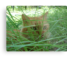 Tiger in the Tall Grass Metal Print
