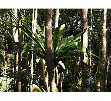 RAINFOREST STAGHORN Photographic Print