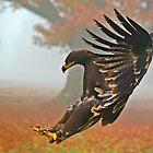 Eagle Landing by Gary Moffat