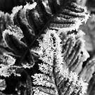 Frostbite by Joakim