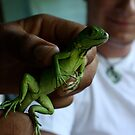 Iguana Inspection by BLAMB