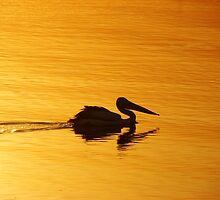 Golden Pelican Sunset by Martice