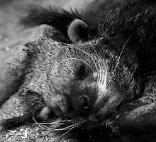 Sleeping Binturong by hannahelizabeth