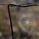 Web. by trevorb