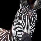Burchells Zebra 2 by Lisa Roberts