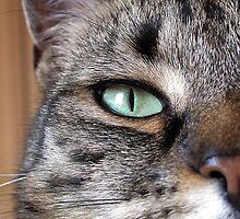 Green Eye. by Forfarlass