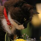 Tussi sniffing flowers by vanStaffs