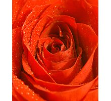 Single Red Rose Photographic Print