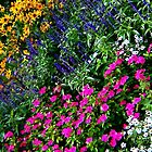 Rainbow of flowers by Kendra Taber