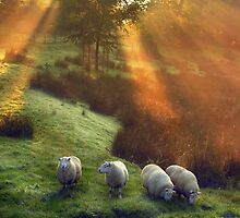 Holy Sheep!  by Angie Latham