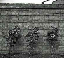 Wallflowers by Fotofill