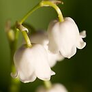 Lily of the valley closeup by Mariann Rea