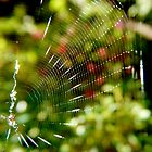 shiny spider web by tego53