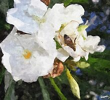 Single White Oleander with Bee 1 Painterly by Christopher Johnson