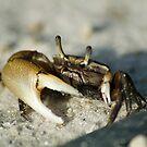 Crabbie by Donna Adamski