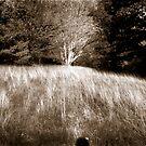 Sidney's Meadow by Yuri Lev