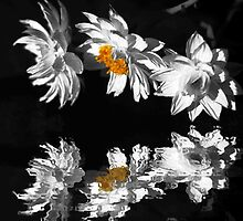 Paper Daisies by Beth A