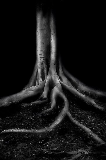 Ghost Fig by GiGee
