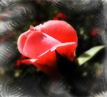 RedRose by Amkia