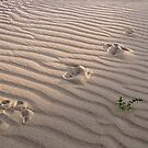Tracks in the sand. by DaveBassett