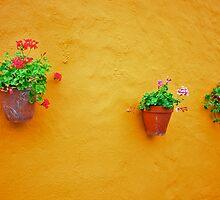 WALLFLOWERS by Tsitra