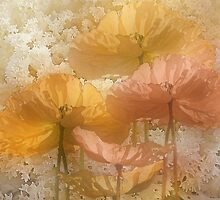 Poppies by CarolM