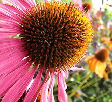 Echinacea Garden by Nicole I Hamilton