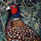 China's ringing neck Pheasant. by Robert David Gellion