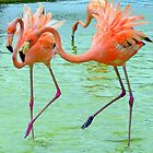 Funky Flamingo Dance ... by Danceintherain