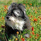 Cloey in the Flowers II by Dyle Warren