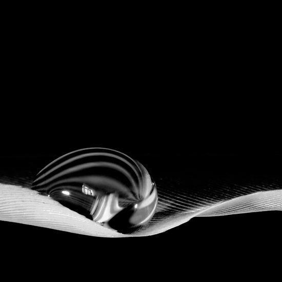 Single drop by Simon Hackney