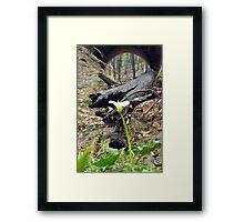 Regeneration - Whittlesea Framed Print