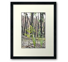 Baby Tree ferns  Framed Print