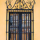 Window at Los Alcazares, Seville by Janice Heppenstall