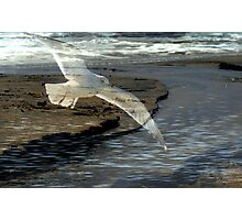 Song of the Gull Photographic Print
