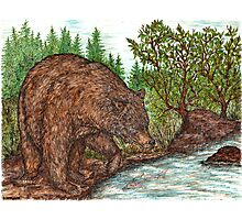 Bear fishing Photographic Print