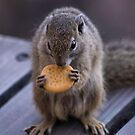 THE TREE SQUIRREL by Magaret Meintjes