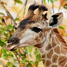 GIRAFFE AND .... AUTUM by Magaret Meintjes