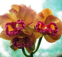 Cattleya - Yen Twenty-four carat.jpg by Forto