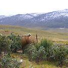 vale of Belvoir, Tasmania by gaylene