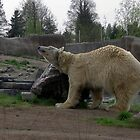 ice-bear scratching by schaduwvacht