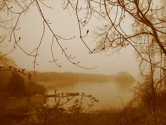 Morning Mist by Tania Palermo