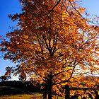 Autumn splendour 1 by Paul Mercer